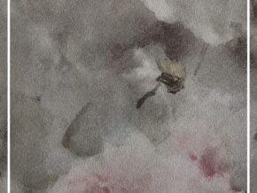 کاغذ دیواری طرح گل vincenza کد ۴۶۷۳۱۴